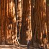 Exploring Sequoia National Park, California