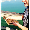 Boy with flounder caught at fishing pier.
