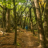 My Friend Paul Hiking in the Woods of Parque Nacional Los Glaciares, Argentina