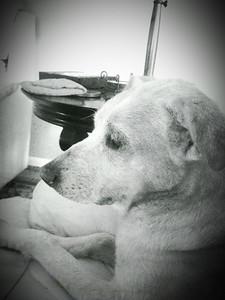 Cassi dog.