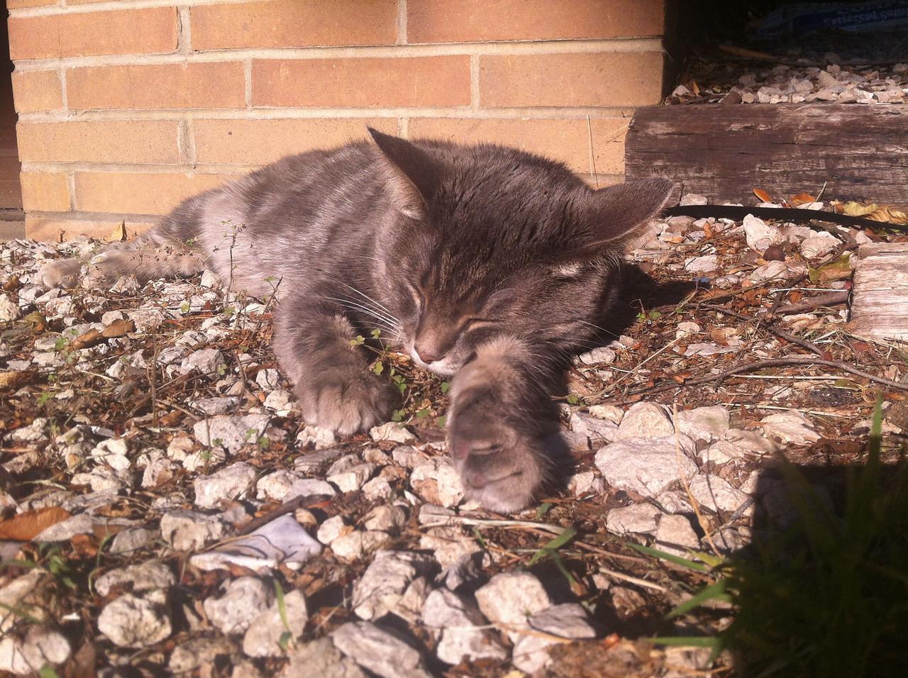 Naku seeks the sun<br /> Warm sunshine begets good sleep<br /> Our moment of zen