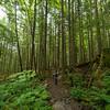 Hiking in the Cascades, Washington