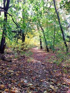 Upper vine brook Lexington MA