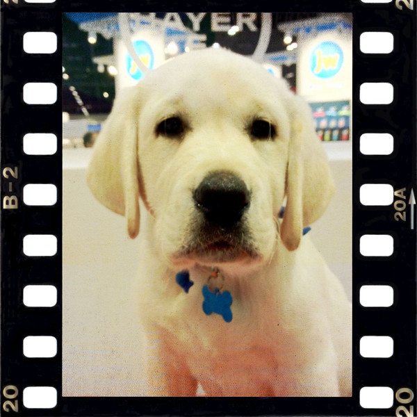 At the Global Pet Expo - the dog used in Bayer's commercials and advertisements. How adorable is that!?!