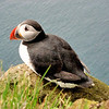 dericandlauren.com | A cute puffin on the cliffs at Latrabjarg, Iceland Westfjords. This is one of my favorite photos from our Spring 2009 Iceland trip.<br /> Note: testing mobile upload feature