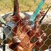 Love, love, love baby orangutans!!!!