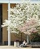 Spring Campus Photos 4 18 11 Hebard-16