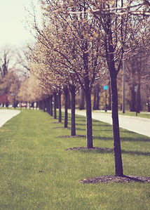 campustreerow