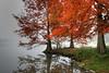 Autumn Trees_7215001