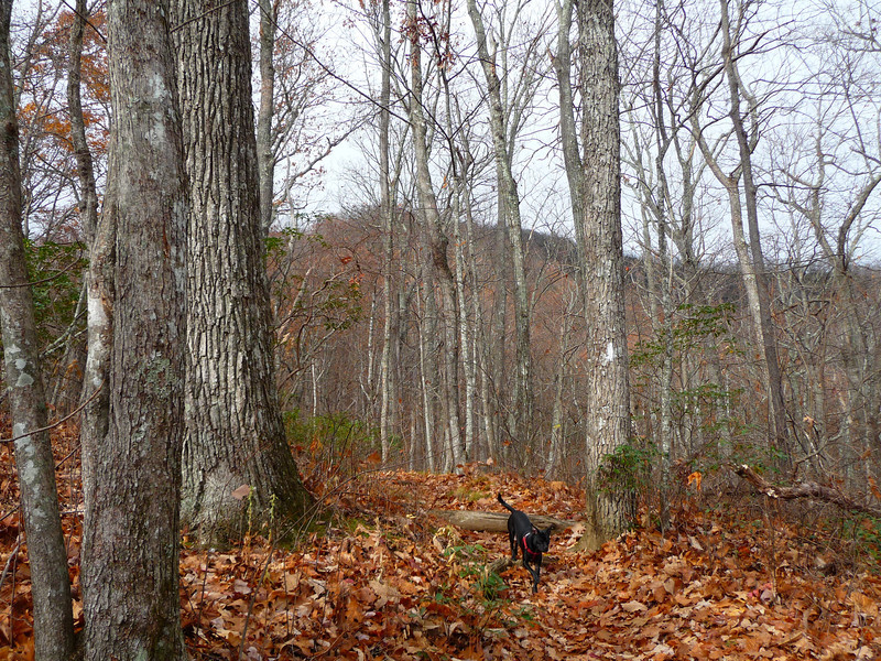 <h1>Bradley</h1>Along the trail to Pilot Mountain in Transylvania County, NC.