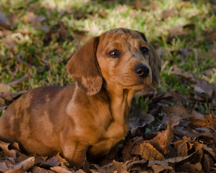 http://ericliffmann.smugmug.com/Other/Canine-Portraits/i-44zZJsB/0/L/DSC_4128-L.jpg