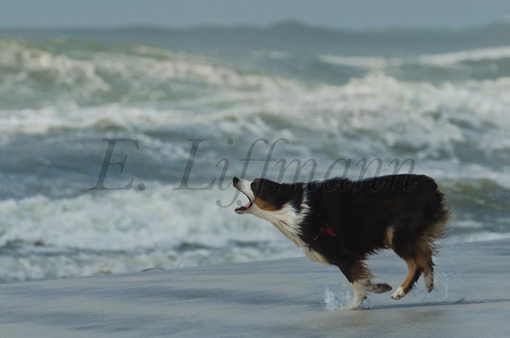http://ericliffmann.smugmug.com/Other/Canine-Portraits/i-NJcQnC4/1/XL/DSC7875-XL.jpg