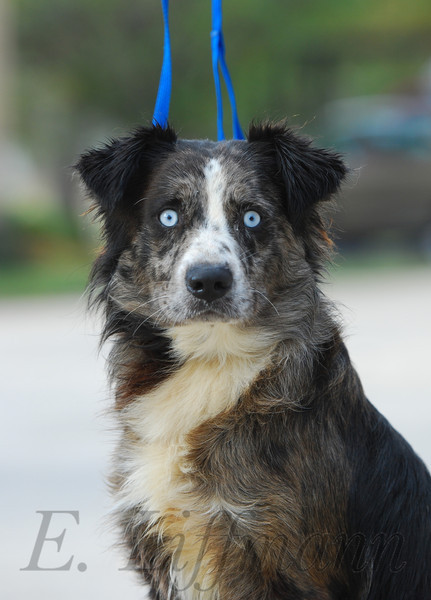 https://ericliffmann.smugmug.com/Other/Canine-Portraits/i-cSj4fN5/0/L/DSC3317-L.jpg