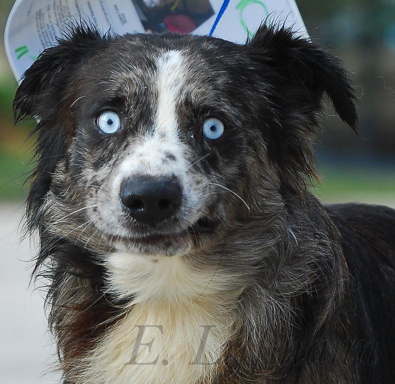 http://ericliffmann.smugmug.com/Other/Canine-Portraits/i-sK93LZL/0/XL/DSC_3312-XL.jpg