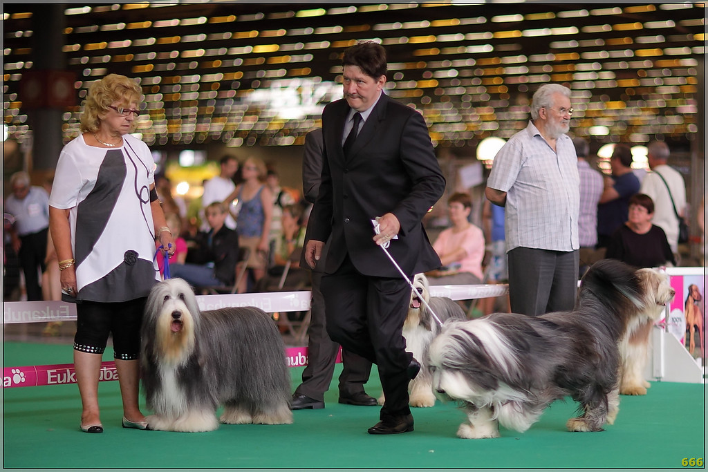 IMAGE: http://photos.corbi.eu/Other/Canon-85L12II-Dog-Show/IMG0420filtered/930778973_a8YuL-XL.jpg