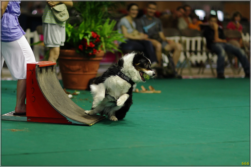 IMAGE: http://photos.corbi.eu/Other/Canon-85L12II-Dog-Show/IMG0869filtered/930778387_FVNEu-XL.jpg