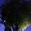 Tree across the street with moon glow