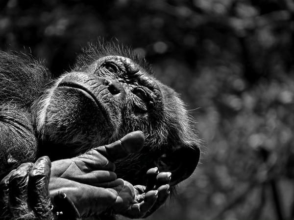 Zoo Photograph