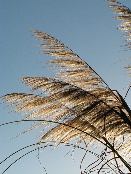 Cattails - Canon G9 - ISO 400