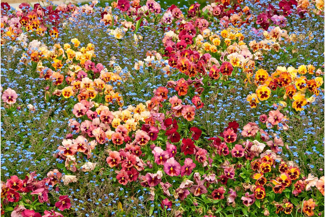 Flowers (Pansies) - 12x18, $145