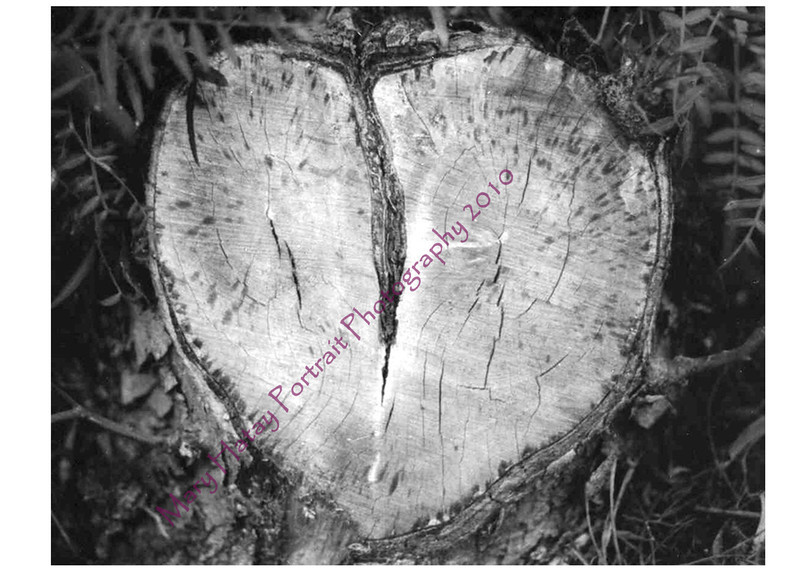 heart copy jpg  border