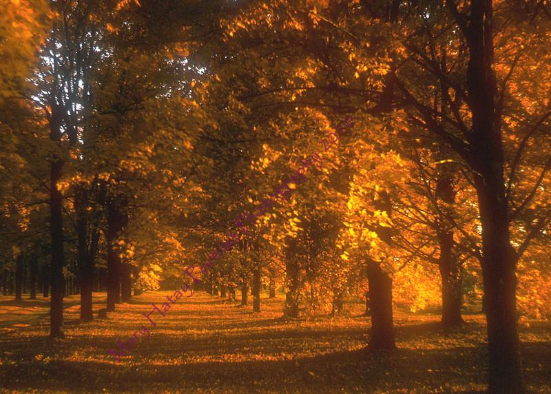 autumn enlargement copy