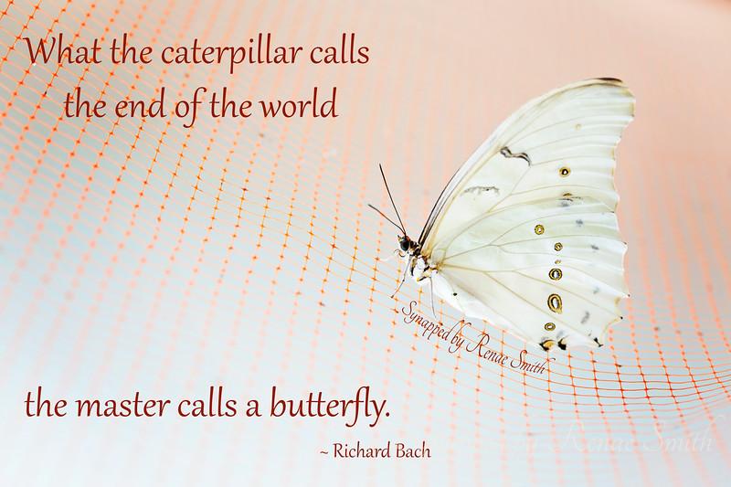 What the caterpillar calls