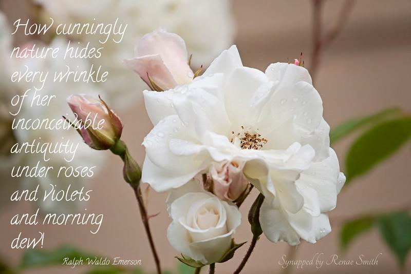 Antiquity under Roses