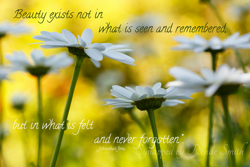 Felt and Not Forgotten