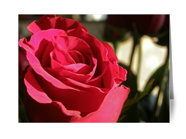 """5 x 7 folded Red Rose Valentine Card for any loved one!<br /> Inside reads:<br /> """"Even the most beautiful flower can't compare<br /> to the beauty I see in you."""""""
