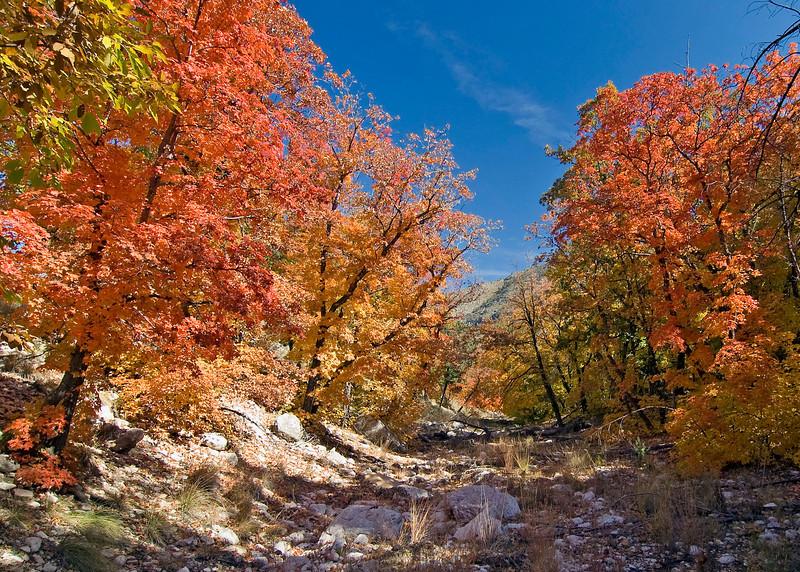 Dog Canyon, GMNP