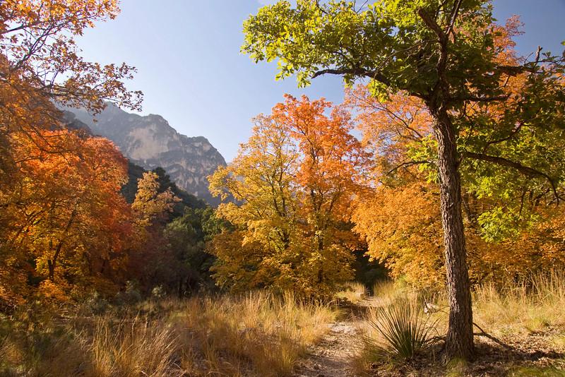 McKittrick Canyon, Guadalupe Mountains National Park (GMNP)