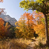 McKittrick Canyon, Guadalupe Mountains National Park (GMNP)