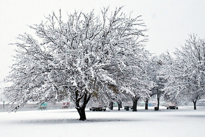 Carlsbad Snow Day