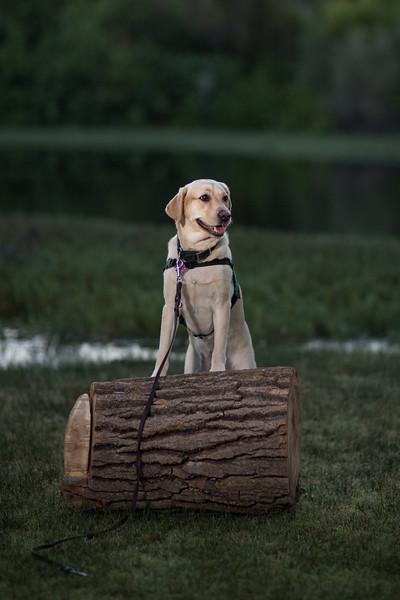 Top Dog-16