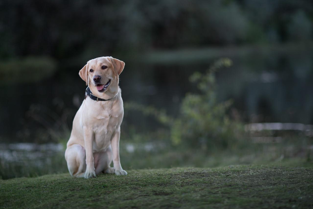 Top Dog-5