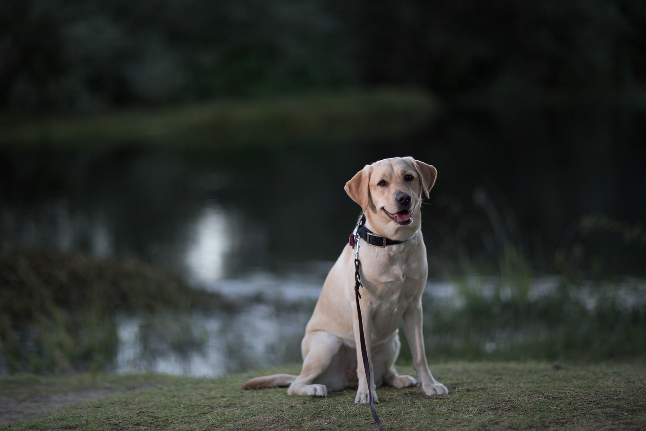 Top Dog-4