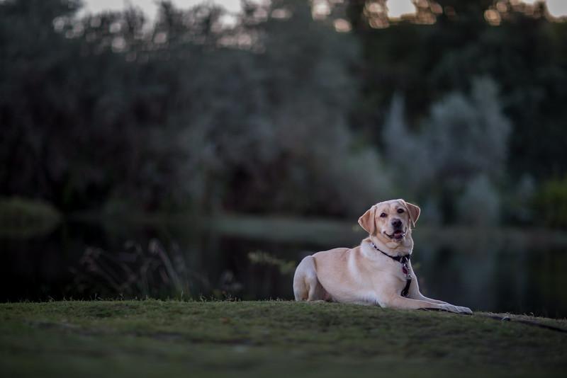 Top Dog-1