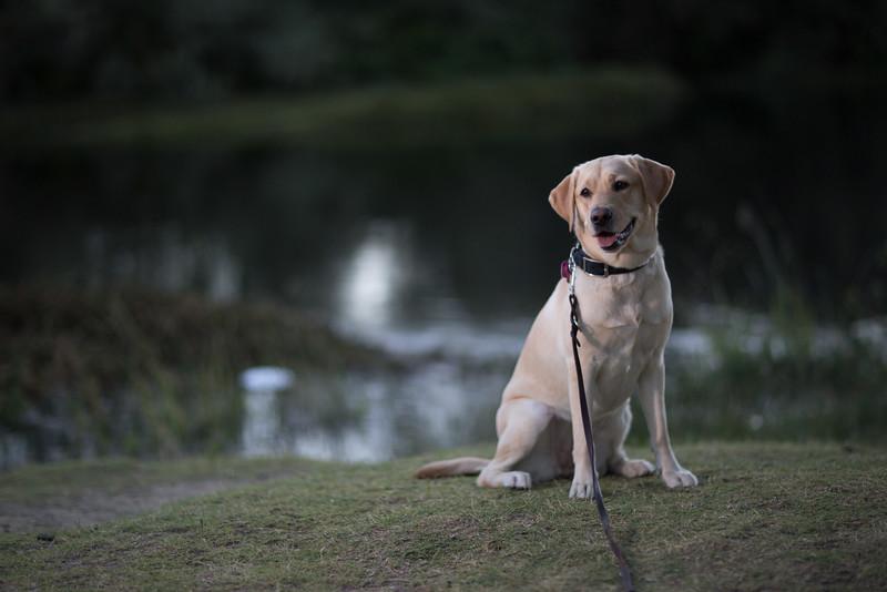 Top Dog-3
