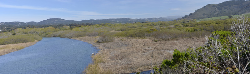 Carmel River Wetlands