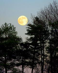Full Moon Over Caroline