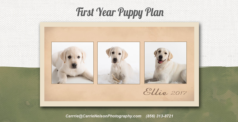 Pet MarketingCard-4X8 front 2020
