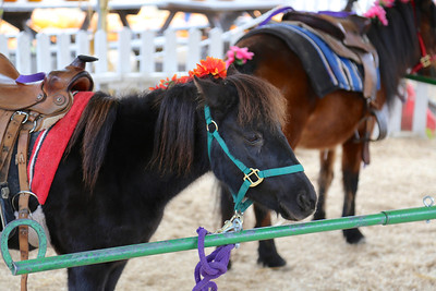 One of the ponies getting ready for the kids.