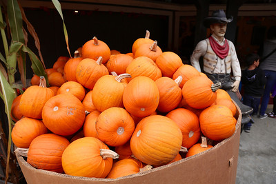 There were lots of pumpkins in Half Moon Bay this weekend.