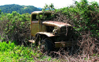 Truck in the bramble