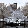 Boston Public Garden. January, 2013.