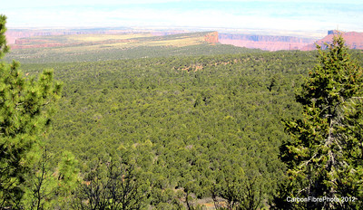 Fisher Mesa.  (Fisher Towers can be seen just to left of the tree on the right.  The tip of the tree is pointing at Top of the World above Fisher Towers.)