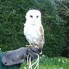 Gorgeous owl at Alnwick Castle