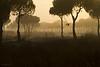 Doñana al amanecer<br /> Junto al Cerro de los Ánsares