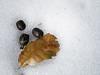 Desechos sobre la nieve (cámara compacta)<br /> (Nieve, excrementos y hoja caída desintegrándose cada una a su velocidad)